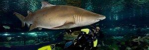 Aquarium.Barcelona.Sharks.Vesping